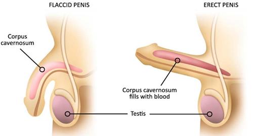 disfunctie erectila